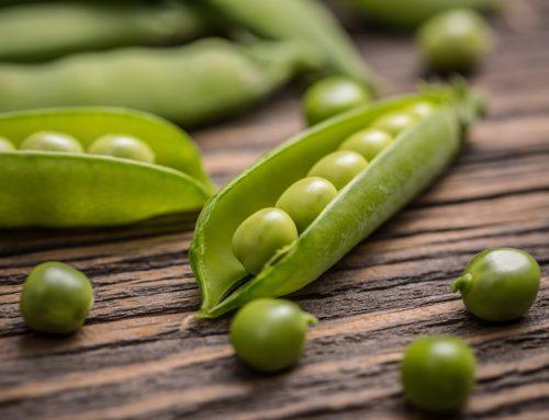 Frische Erbsen: gesunder Genuss